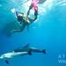 Bimini – hrátky delfínů a dětí pod hladinou, foto: Atmoji ©WildQuest
