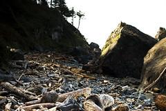 Hidden Beach and the Driftwood Graveyard