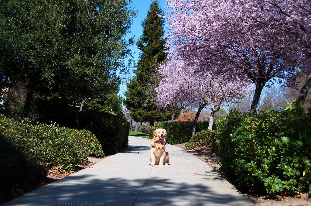 Spring in Suburbia