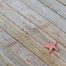 Starfish on Dock