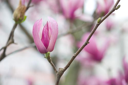 高嶺之花就是要人抬頭看才看到, 不禁有種「叫我女王!」的感覺