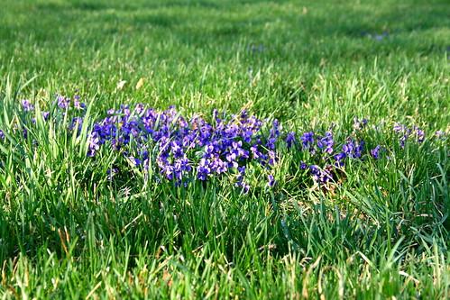 81:366 Violets!