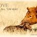cow DSC_0747 Explore
