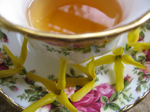 Red Tea with Forsythia