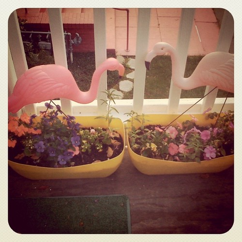 my flamingos