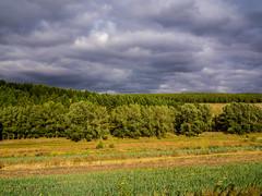 The Colorful Hulunbuir Grasslands