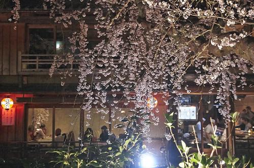 【写真】2014 桜 : 祇園白川/2020-09-13/IMGP5577