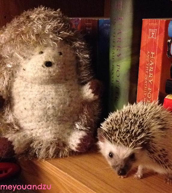 Hangin' hedgies