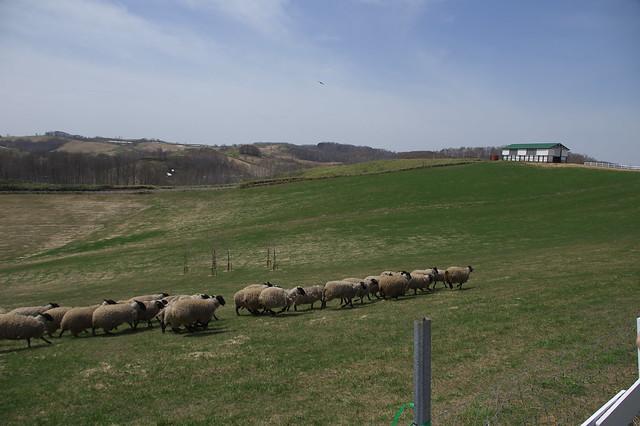 20160503羊と雲の丘_25