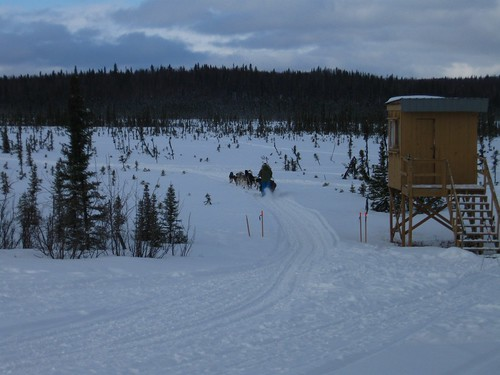 Training-Jr-Iditarod-Aurora-2-2012-5