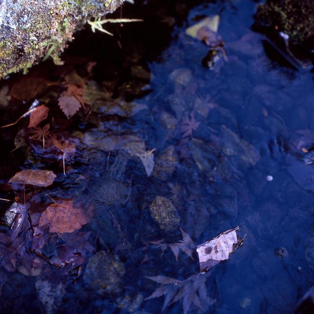 水中の残秋