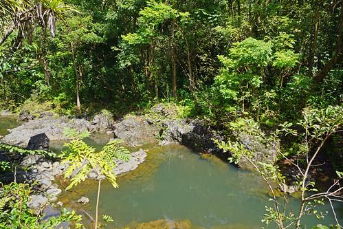 2012-02-10 02-19 Maui, Hawaii 480 Ke'Anae Arboretum