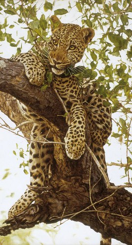 "'Leopard in a Tree' oil on board 20"" x 11"