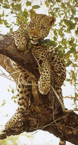 """'Leopard in a Tree' oil on board 20"""" x 11"""