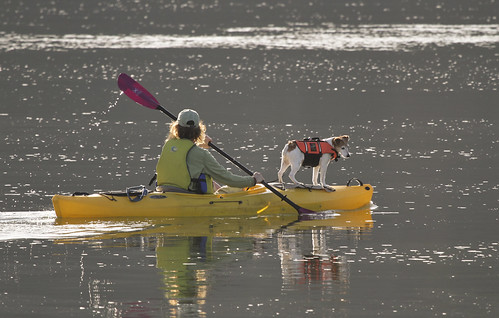 woman kayaks with jack russel Nisqually Wildlife Refuge March 2012