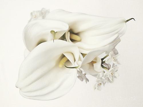 Calas y narcisos en clave alta/ Calla lilys and daffodils