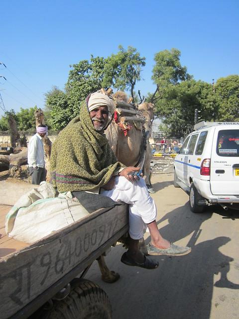 Rajasthani camel driver