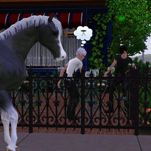 """Wild"" horse downtown"