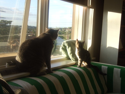 watching birds together