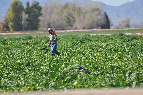 people az welton farmworkers weltonaz pamelaschreckengost pamschreckcom