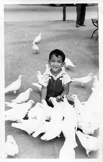 Doves and Me