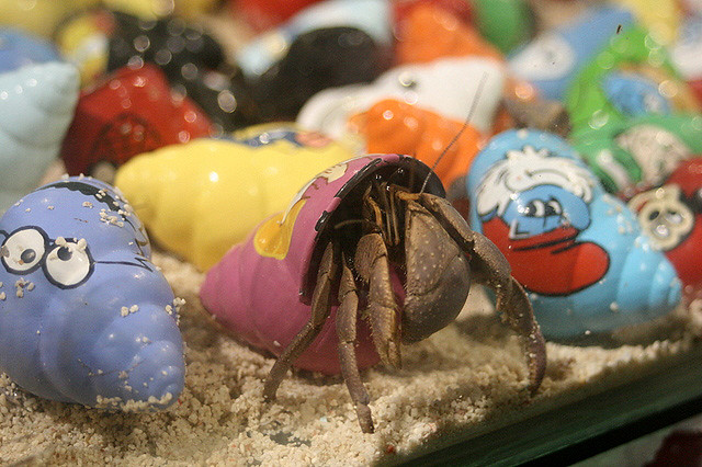 Hermit crabs are the new pet rocks!