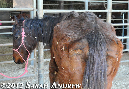 Camelot Auction saddled with abandoned horses