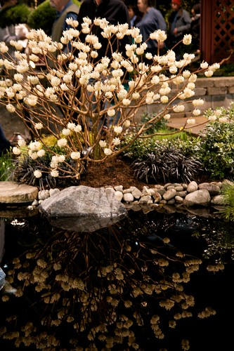 edgeworthia reflected  1250