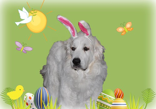 Lucy says Happy Easter.....and to please take the silly fake ears off of her!!! :)