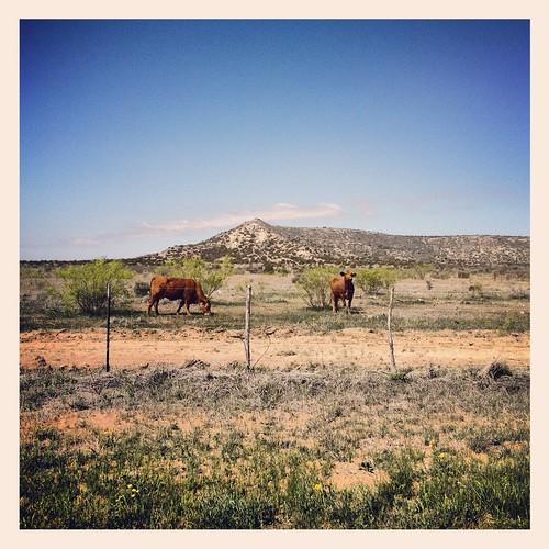 ranch west landscape texas cattle cows llano estacado