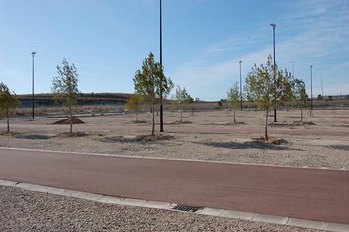 Plantación de Pinus
