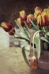 365 days / day 8 - A bucket of tulips
