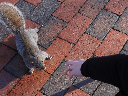 Friendly Squirrel in Lafayette Park