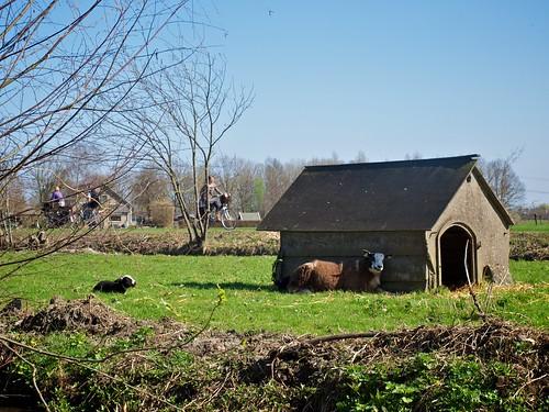 Schaap en lam bij een huisje