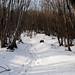 Neve tra i sentieri del Monte Venda (Sentiero G. Lorenzoni, Colli Euganei - Padova). by SolitudeWays.