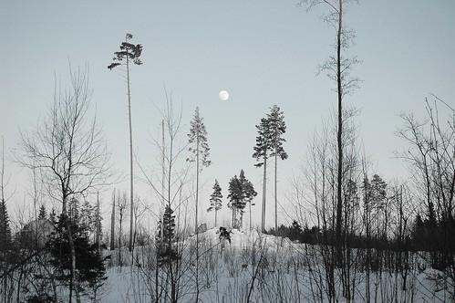 winter sky moon snow tree pine finland orimattila