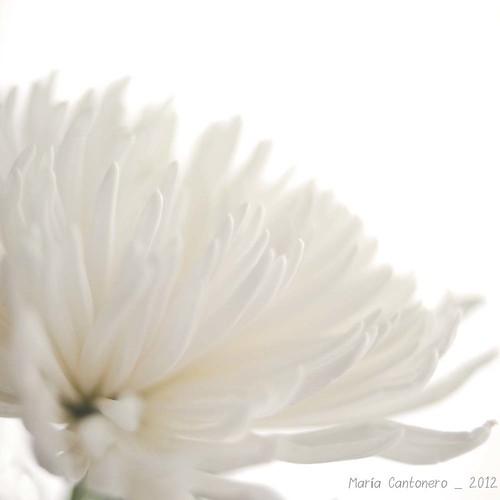 fotografiando flores