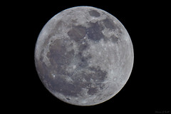 Worm Full Moon - March