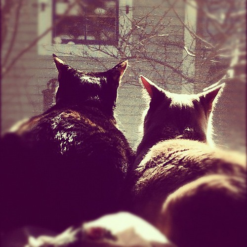 two cats bird watching