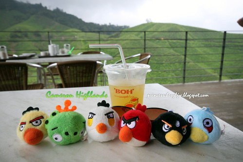 Cameron Highlands angry birds