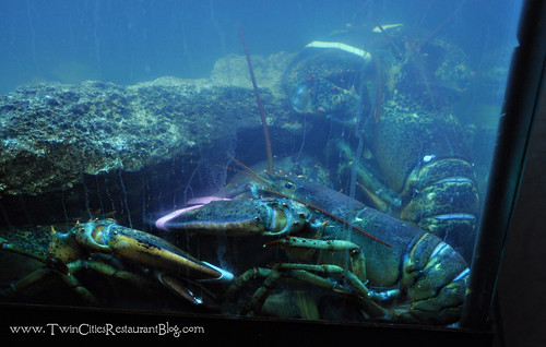 Live Lobster Tank at Mystic Steakhouse ~ Prior Lake, MN