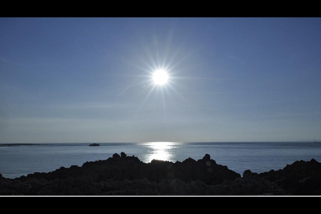 Notre étoile de mer (4581)