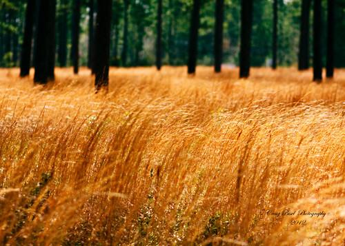 field grass mobile gardens canon catchycolors landscape eos golden spring al alabama springbreak grassland bellingrath 2012 40d craigbisel