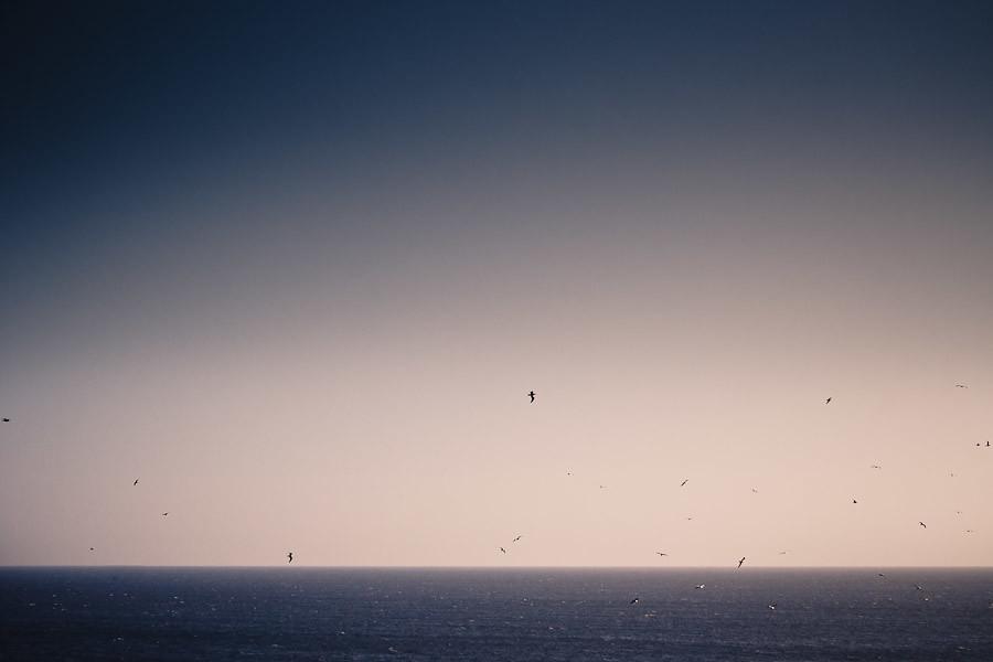 Vögel über der See