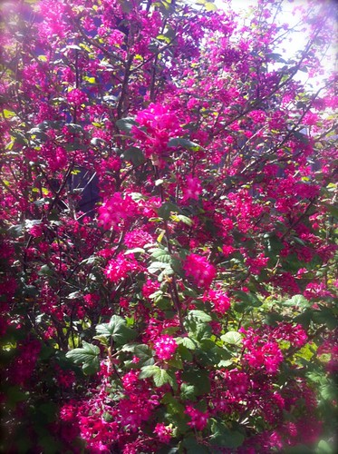 spring blooms in portland