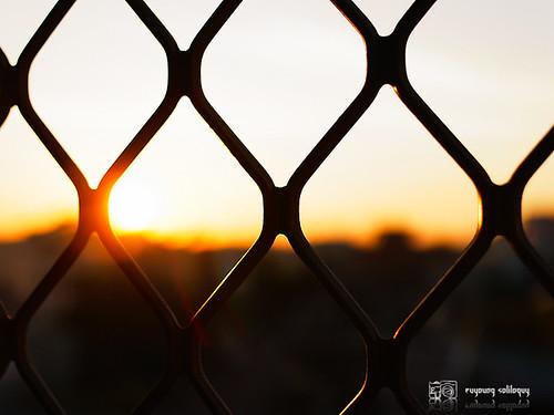 GXR_50mm_view_11