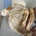 A small mumified child. Chauchilla historical cemetery. Nasca, Peru 14APR12