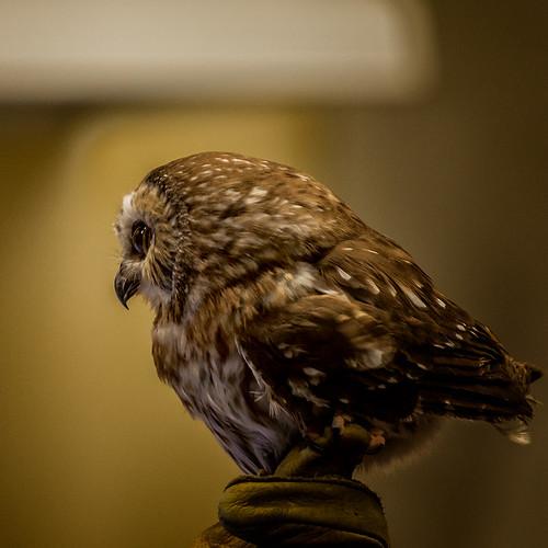 Owl-ish