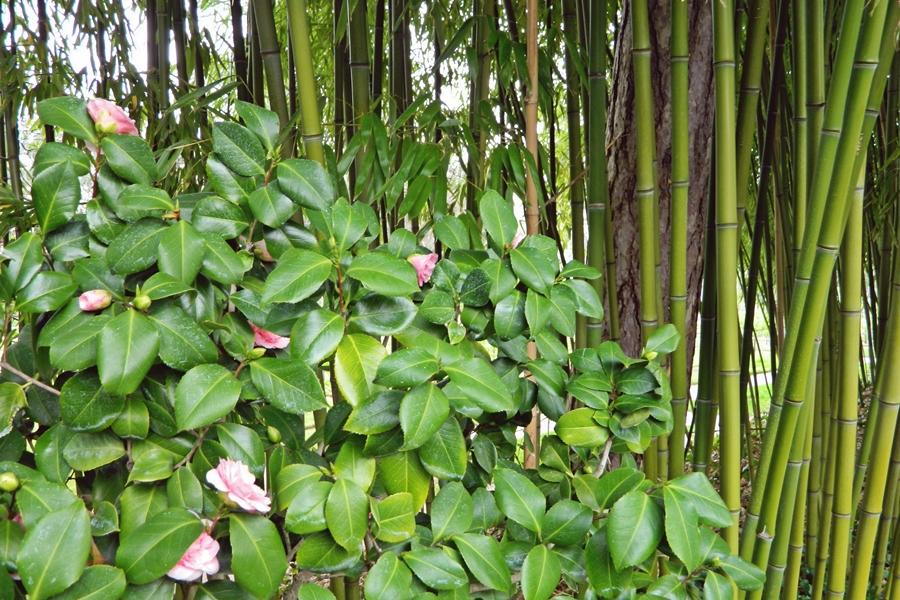 Jardin japonais Albert Kahn (15)