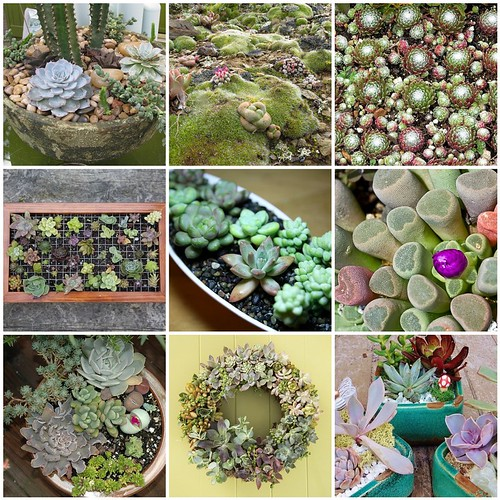 Friday Funspiration: Succulents